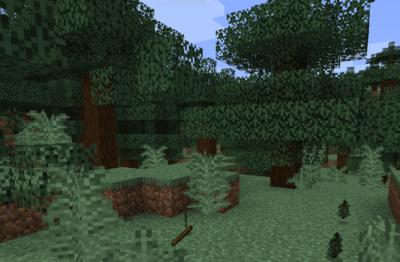 マツの苗木を育てて棒を入手する