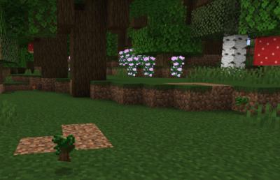 ダークオークの苗木を育ててダークオークの苗木を入手する