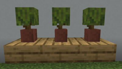 植木鉢に植えて観葉植物として使う
