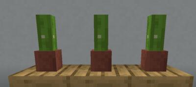 植木鉢に植えて装飾として使う
