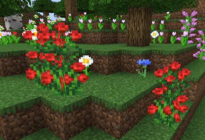 バラの低木の入手方法